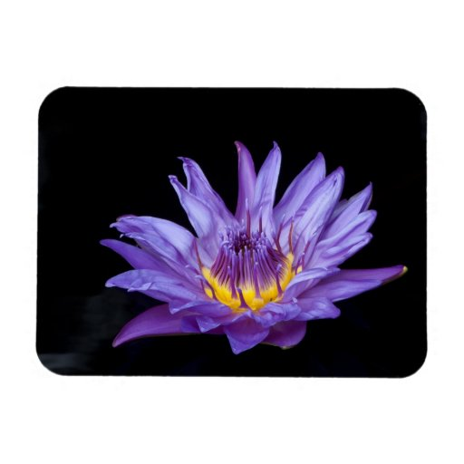 Purple Water Lily Flexible Magnet