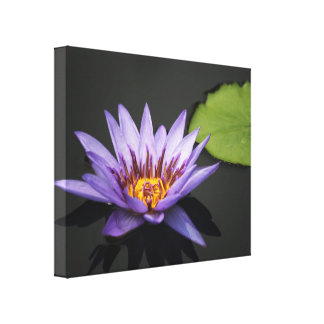 Purple Water Lily Flower Gallery Wrapped Canvas