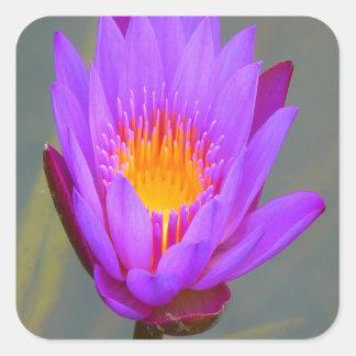 Purple water lily flower sticker