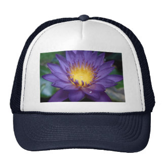 Purple Water Lily Hats