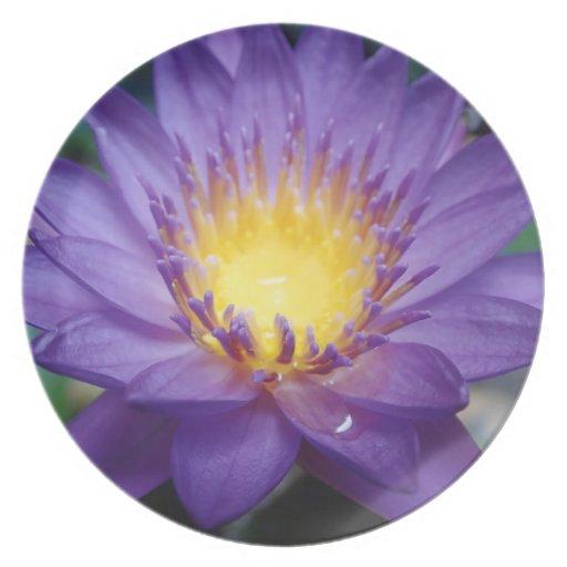 Purple Water Lily Melamine Plate