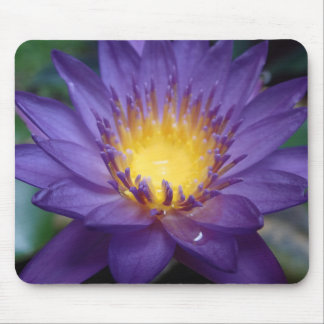 Purple Water Lily Mouse Pad