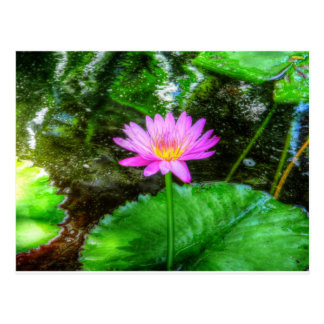 Purple Water Lily Postcard
