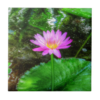 Purple Water Lily Ceramic Tile