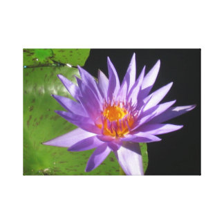 Purple water lily with natures sun stretched canvas print