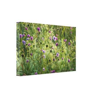 Purple wild flowers in a green meadow canvas print