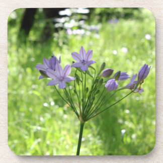 Purple Wildflower Coasters
