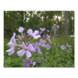 Purple Wildflowers Photo Print