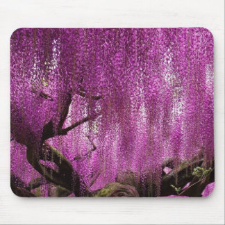 Purple Wisteria pink floral vine flower Mouse Pad