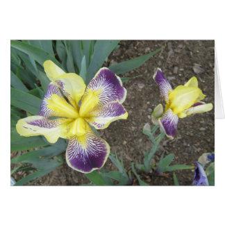 Purple Yellow Iris Pair Small Note Card