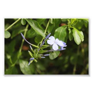 Purpled Flower Photo Print