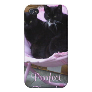 Purrfect Friends Cat Theme iPhone 4/4S Cover
