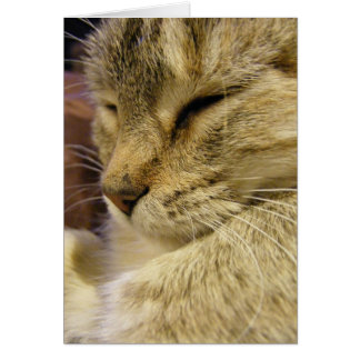 Purring Cat Cards & Postage.