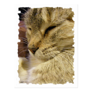 Purring Cat Cards & Postage. Postcard