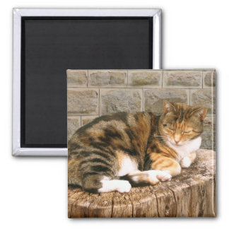 Pussels - Cat on a Stump Square Magnet