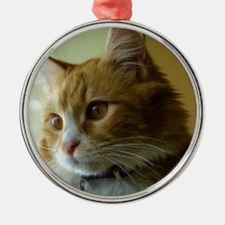 pussy cat christmas tree ornament