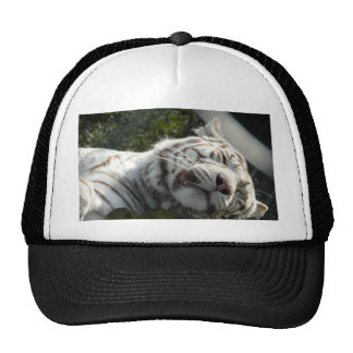 Pussy Cat Mesh Hats