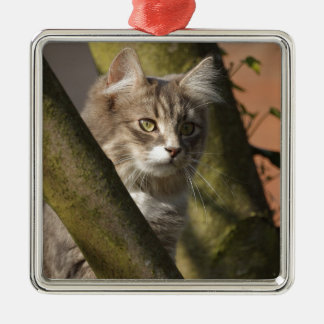Pussy Cat Silver-Colored Square Decoration