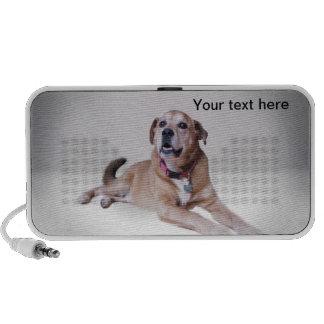 Put your dog on a doodle laptop speaker