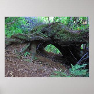 Puu Ohia Hiking Trail Poster