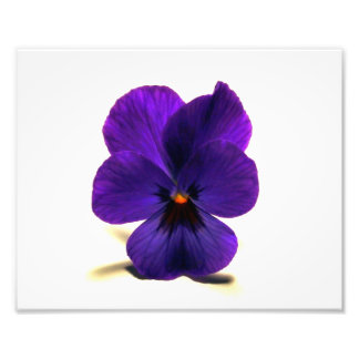 Puuurrrple Pansy at Midnight by Verde Photo Print