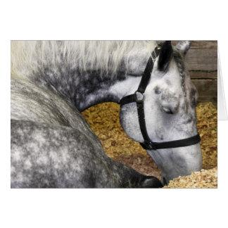 Puyallup Fair Horse 5x7 Card