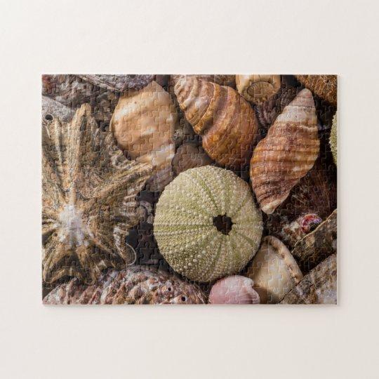 Puzzle of Mixed Sea Shells