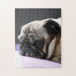 PUZZLE pug Pug - photo: Jean Louis Glineur