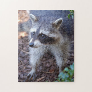 PUZZLE Racoon raccoon - photo: Jean Louis Glineur