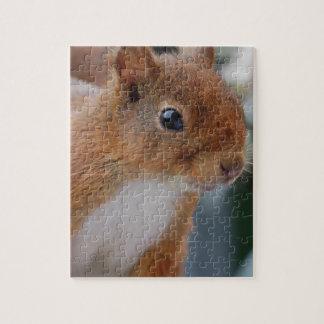 PUZZLE squirrel Squirrel Écureuil
