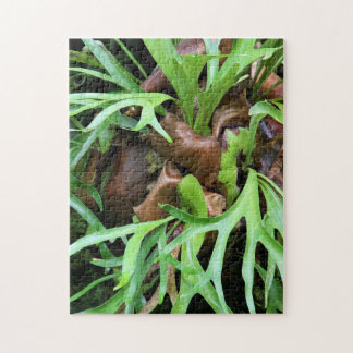 Puzzle - Staghorn Fern