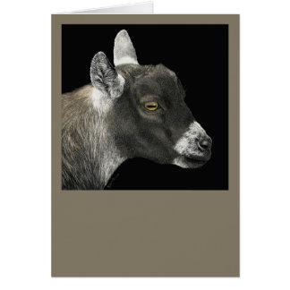 "Pygmy Goat Card - ""Show Goat"""