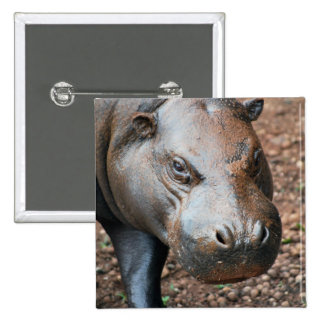 Pygmy Hippo Pinback Buttons