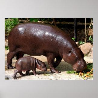 Pygmy Hippo Pair Hippopotamus Portrait Poster