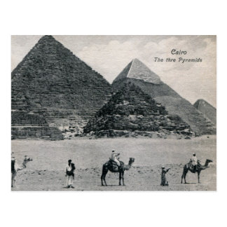 Pyramids and Camels, Cairo Egypt Vintage Post Card
