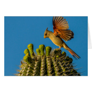 Pyrrhuloxia on Saguaro, Arizona Card