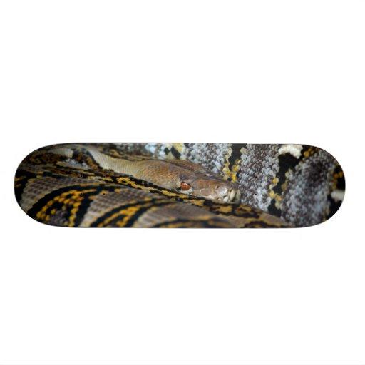 Python photo skate boards