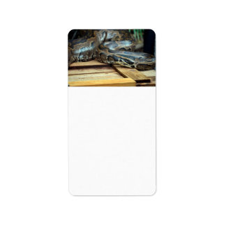 python snake looking left on wooden crate address label