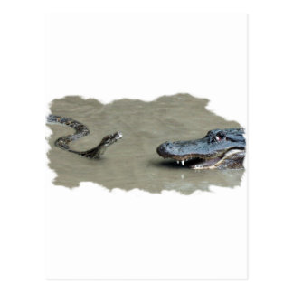 Python vs Alligator Postcard