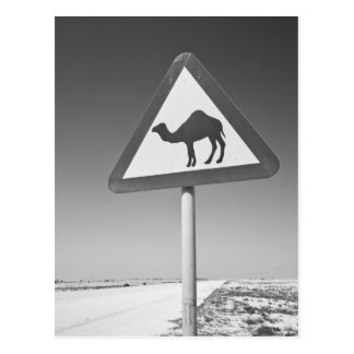 Qatar, Al Zubarah. Camel Crossing Sign-Road to Postcard
