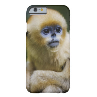 Qinling Mountains, Oct 2006 Barely There iPhone 6 Case