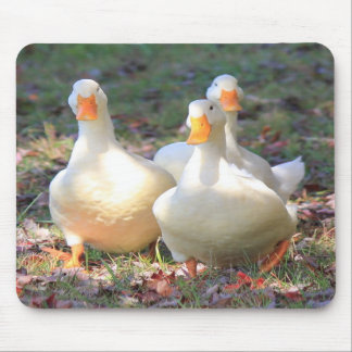 Quack attack mouse pads