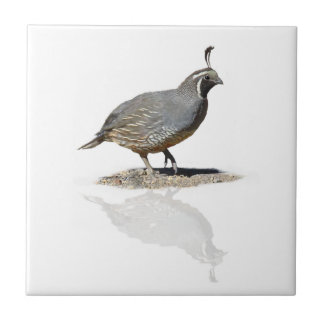 QUAIL REFLECTED TILE