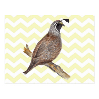 Quail watercolor painting on chevron pattern post cards