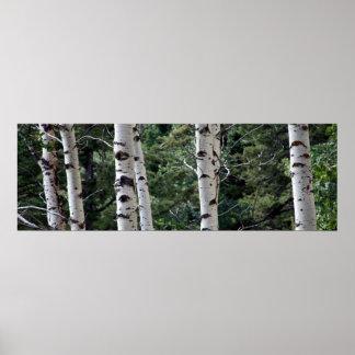Quaking Aspen, Grand Teton National Park Print