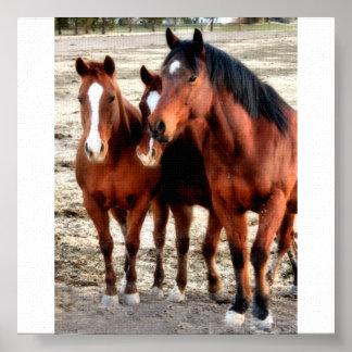 Quarter Horse Art Poster