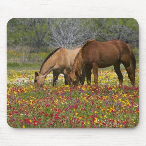 Quarter Horse in field of wildflowers near Cuero Mousepad