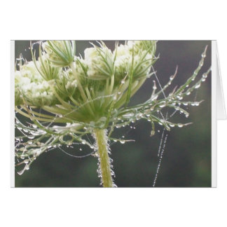 Queen Anne and Morning Dew Greeting Card