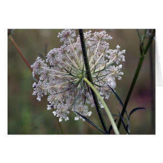 Queen Anne Lace Card