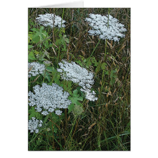 Queen Anne's Lace White Wild Flower Card